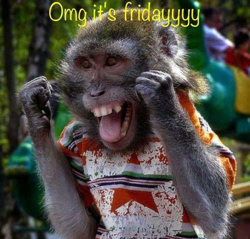 monkey-omg-its-friday